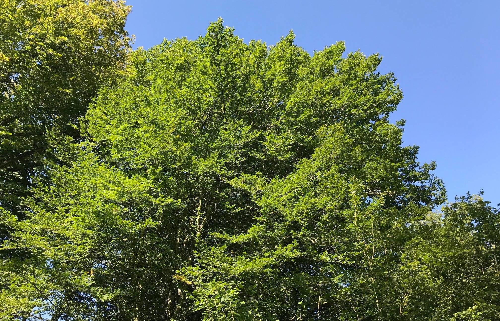 La forêt : une ressource à protéger