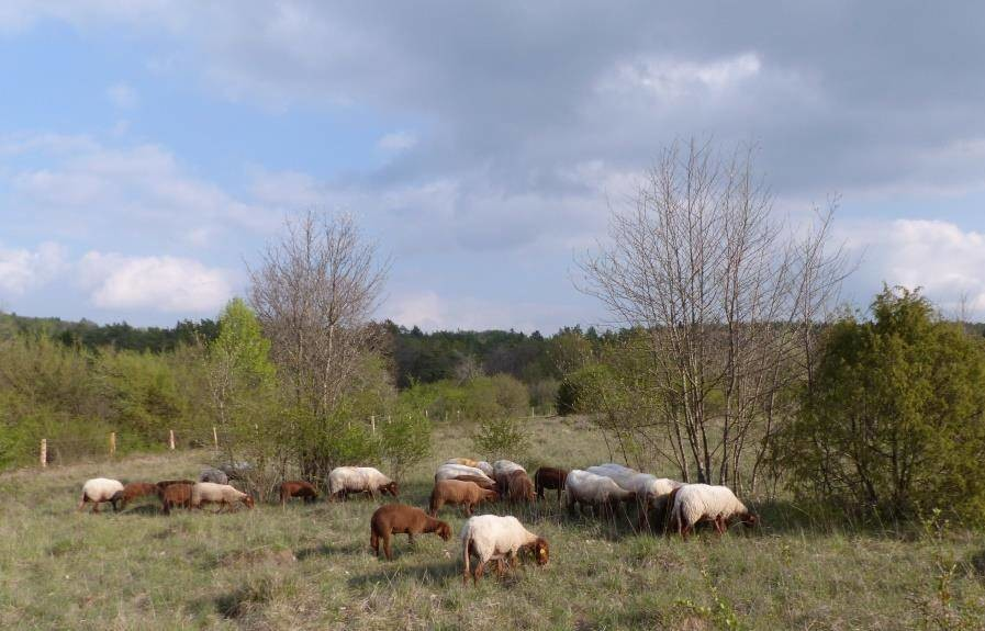 Une dotation supplémentaire de DGF pour 52 communes de Haute-Marne en zone Natura 2000