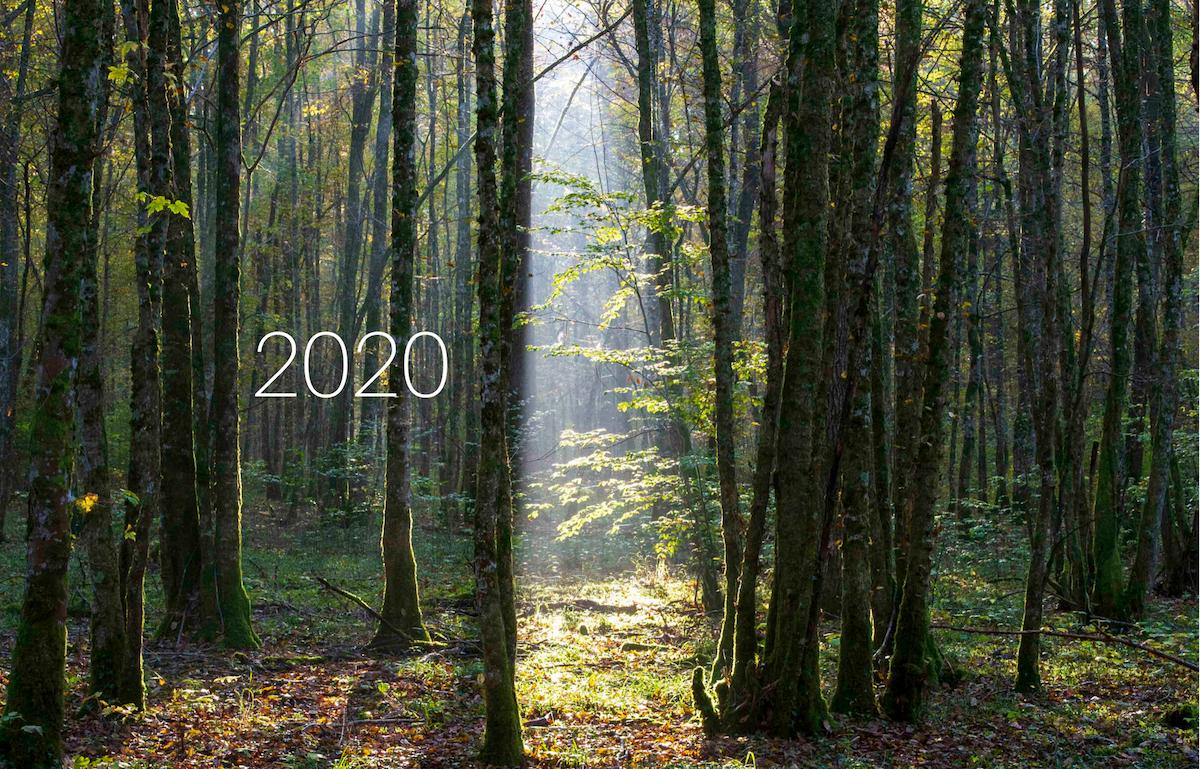 Mes voeux pour 2020