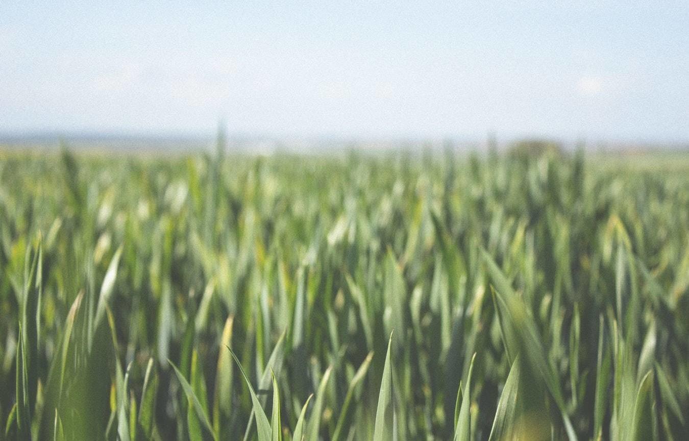Atelier PPE : contribution de l'agriculture au développement des énergies renouvelables