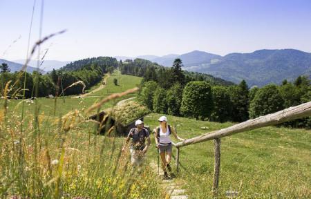 Imaginons le Massif des Vosges en 2040 !